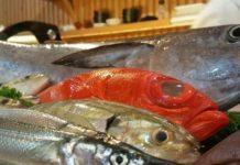 pesce per sushi sashimi quale scegliere
