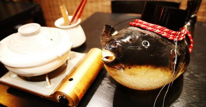 fugu giapponese sashimi